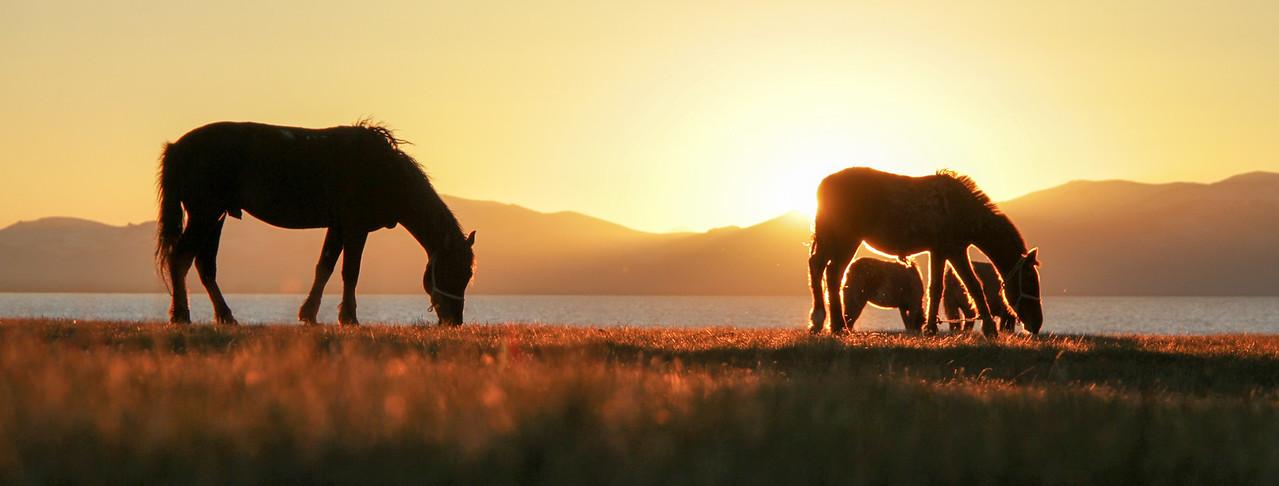Admiring horses in Kyrgyzstan