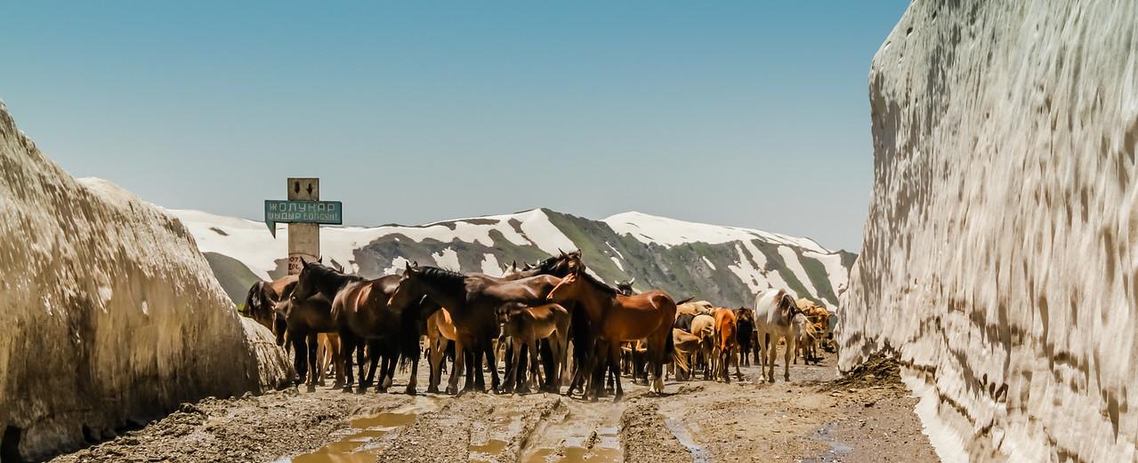 Horses at snowy mountain pass, Kyrgyzstan
